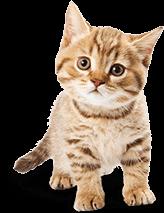 Hrană super-premium pentru pisici
