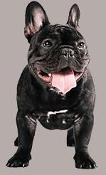 Hrană premium pentru câini