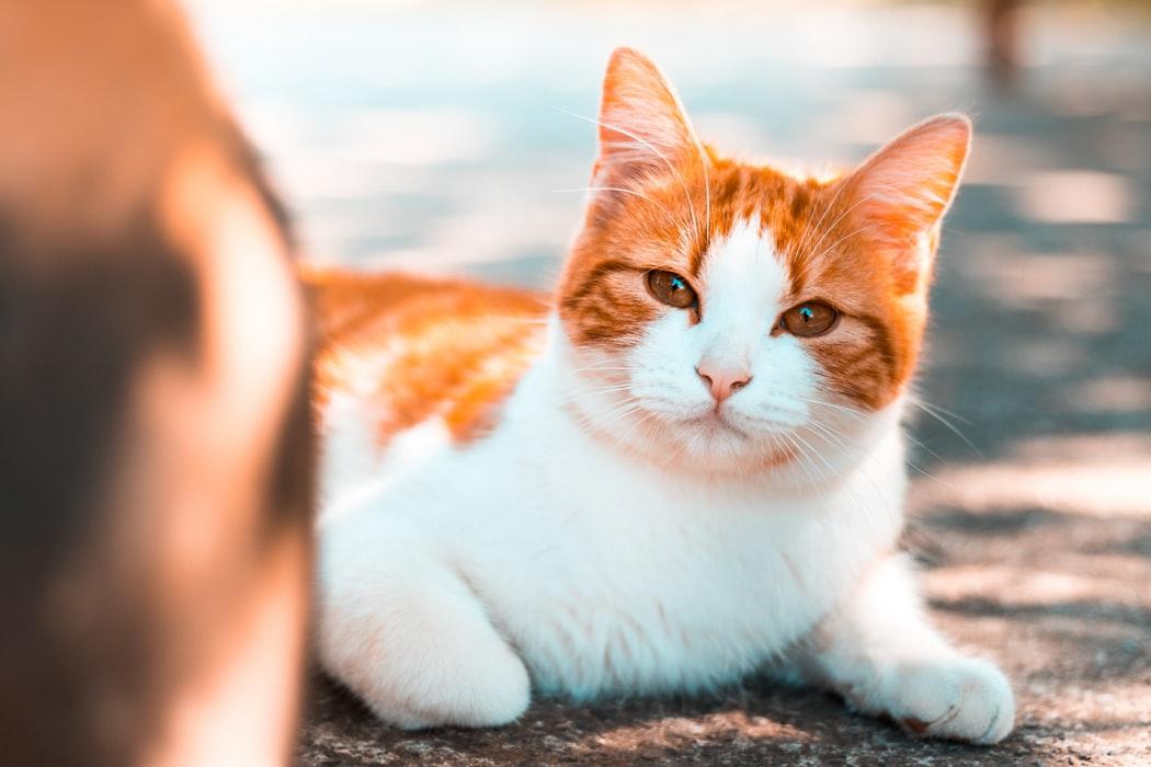 Site ul de dating gratuit de la pisici